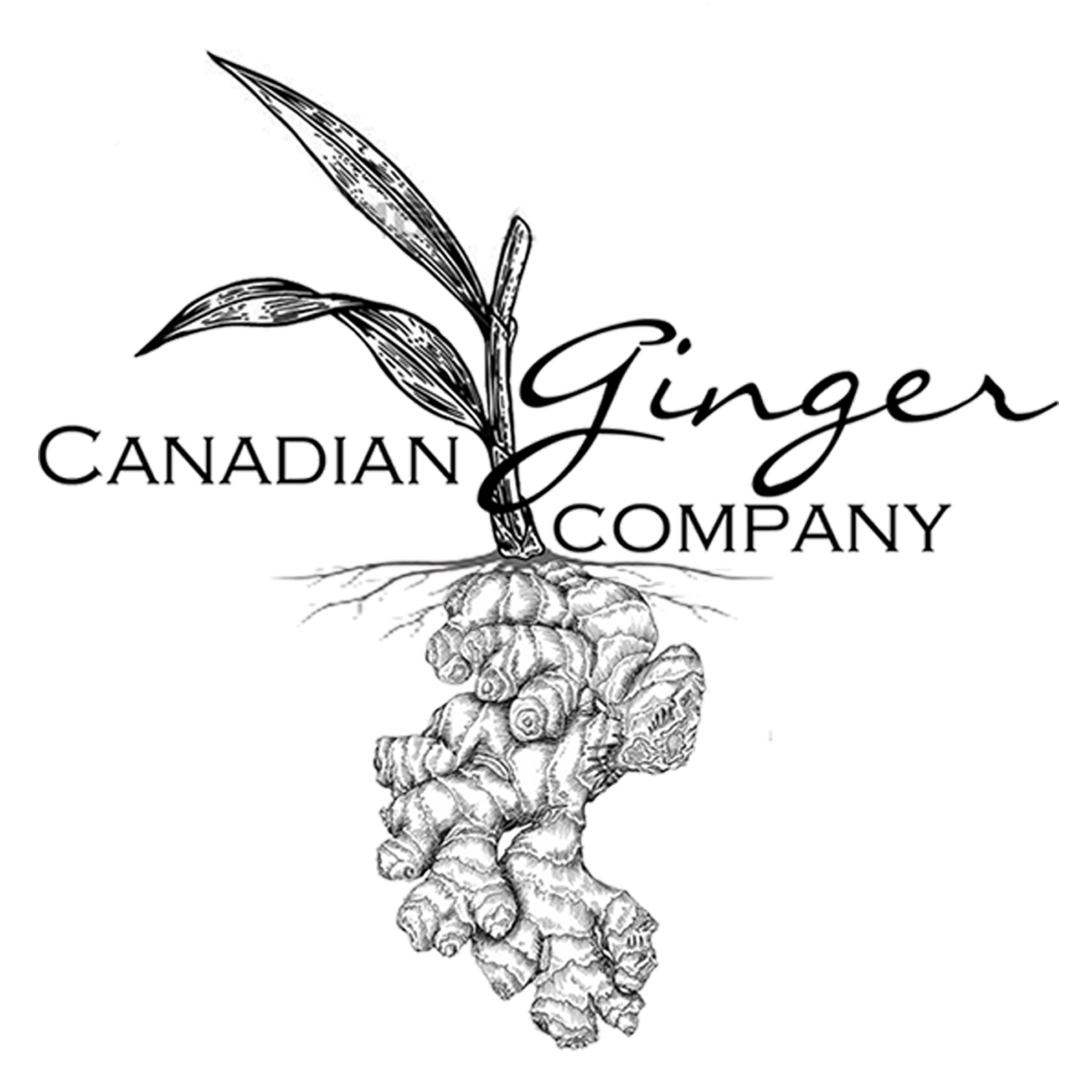 The Canadian Ginger Co.